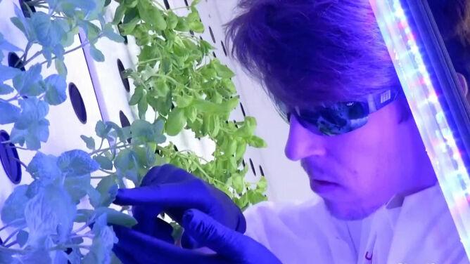 """Uprawiają rośliny w marsjańskich warunkach. """"Smakują wspaniale"""""""