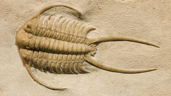 Masowe wymieranie pochłonęło niemal wszystkie morskie gatunki. Naukowcy poznali przyczynę