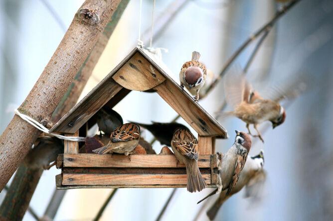 Jak zrobić karmnik dla ptaków? Proste sposoby